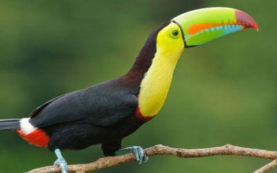 Fascinante Costa Rica
