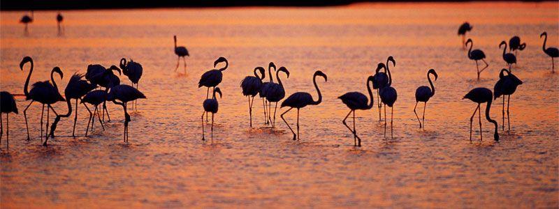 Parques Naturales y observación de Aves