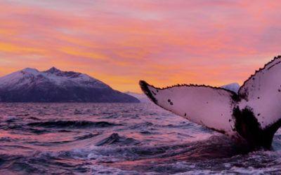 Lofoten, Tromsø y Ballenas