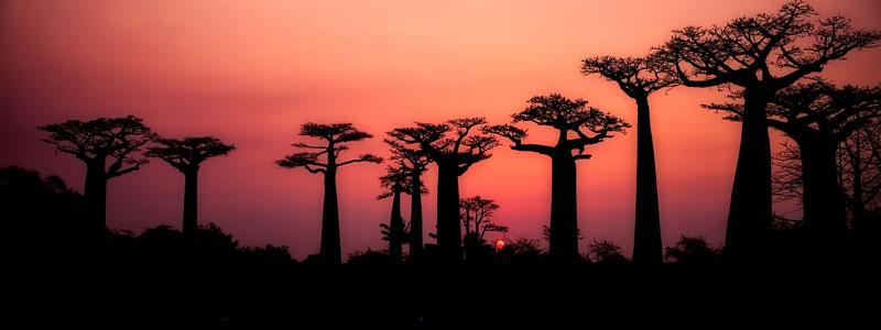 Viaje Fotográfico a Madagascar